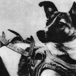 宇宙犬 ライカ / wikipedia
